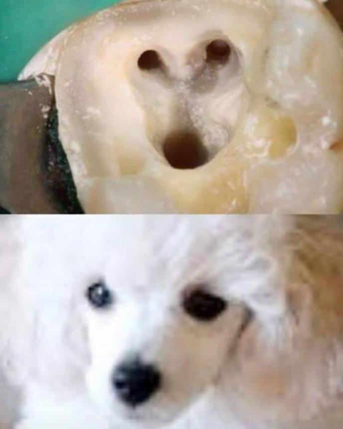 Зуб и пудель