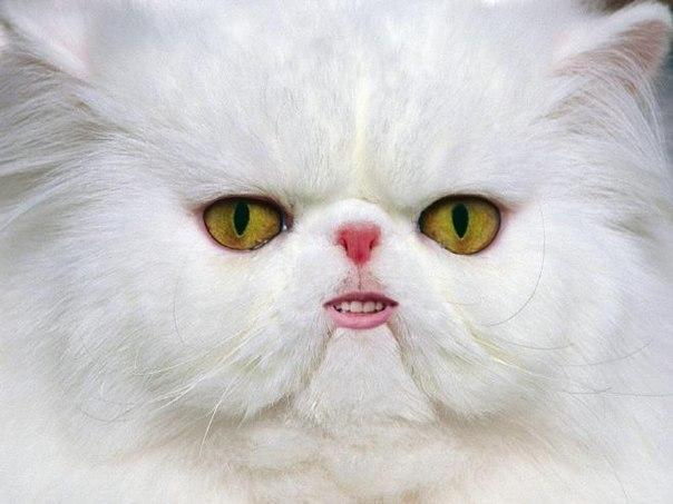 Котик с новыми зубами