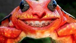 Лягушка с брекетами