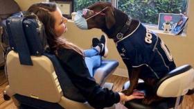 На приеме у собакатолога