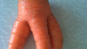 Морковный зуб