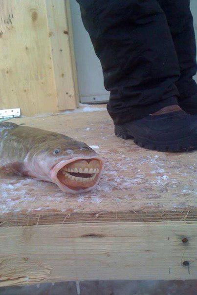 Рыбка после посещения ортопеда