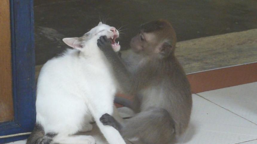 На приеме у обезьянки 3