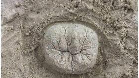 Зуб из песка 15