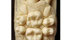 Зубная черепашка 2
