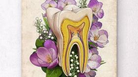 Зубы - цветы жизни