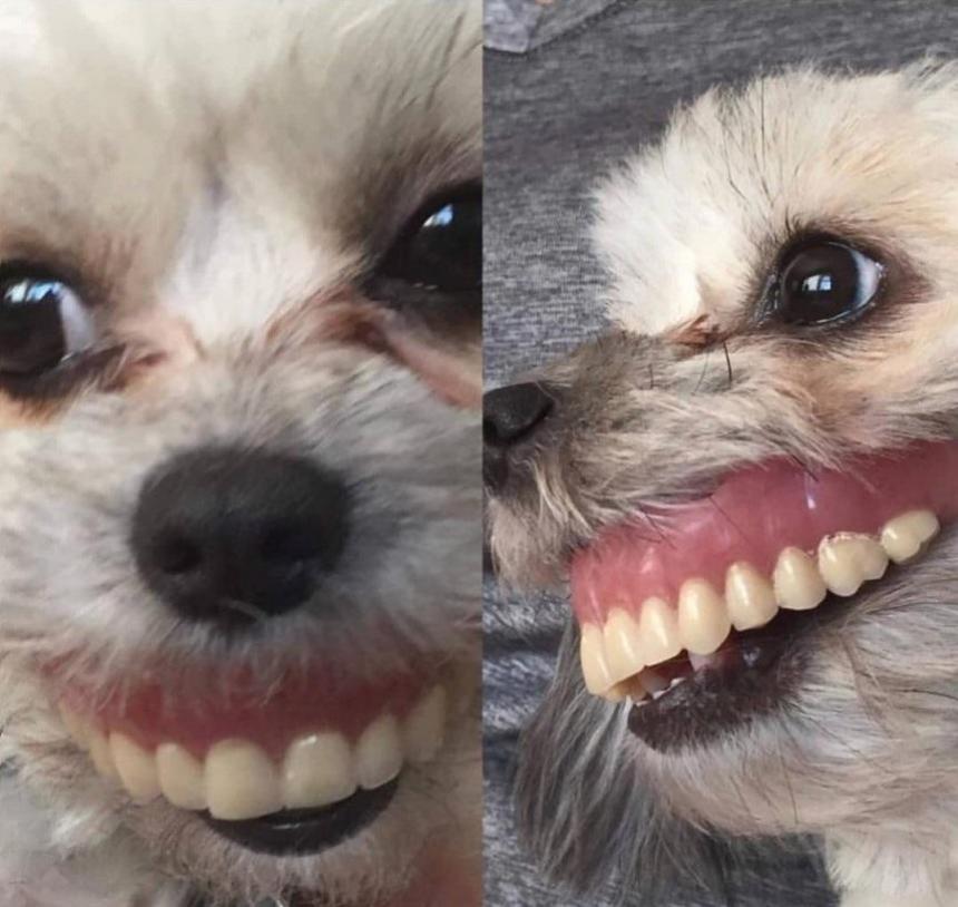 Собака после протезирования 3