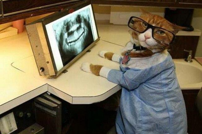 Кот-стоматолог