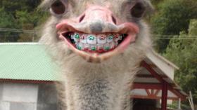 Страус после посещения ортодонта