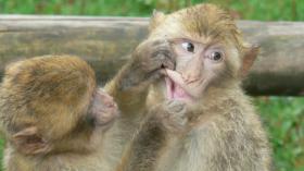 На приеме у обезьянки 4