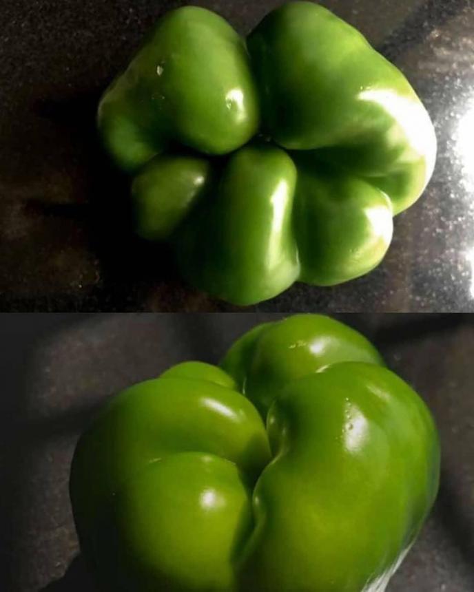 Жевательная поверхность перца
