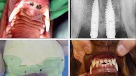 Имплантаты для собаки