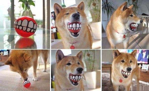 Мячик в дизайне зубов для собаки