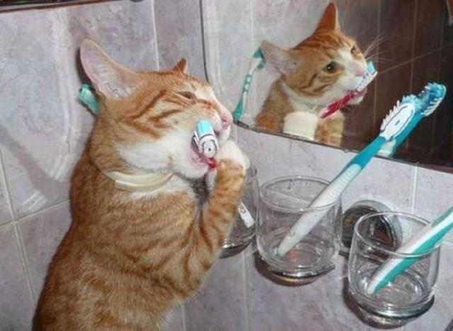Зубы должны чистить все
