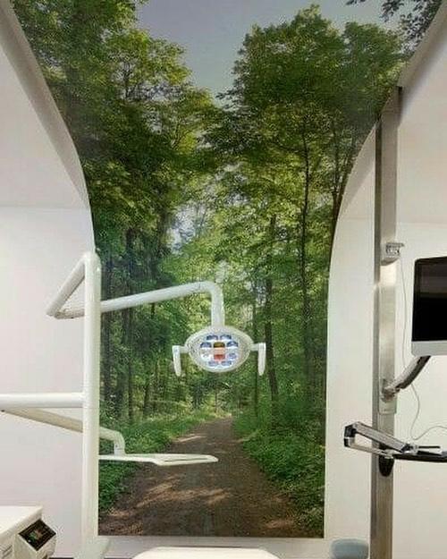 Стоматологический кабинет посреди лесной тропинки
