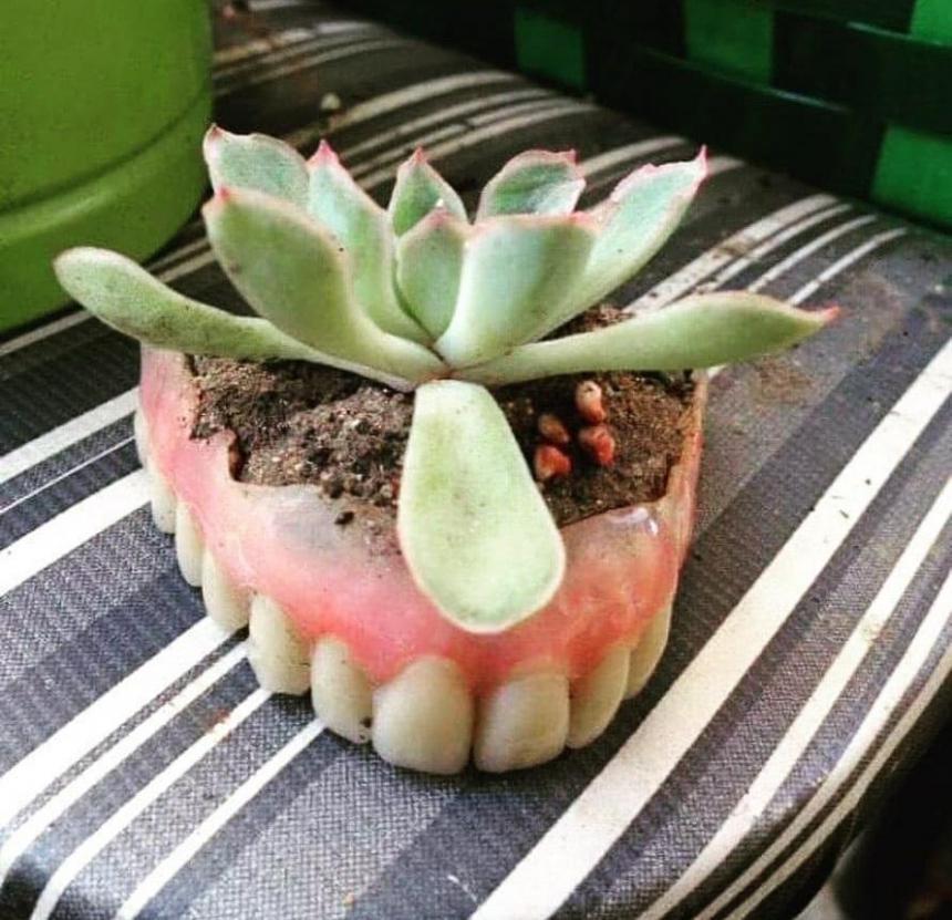 Зубной горшок для цветка