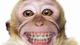 Обезьяна после посещения ортодонта