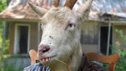 Прекрасный козел