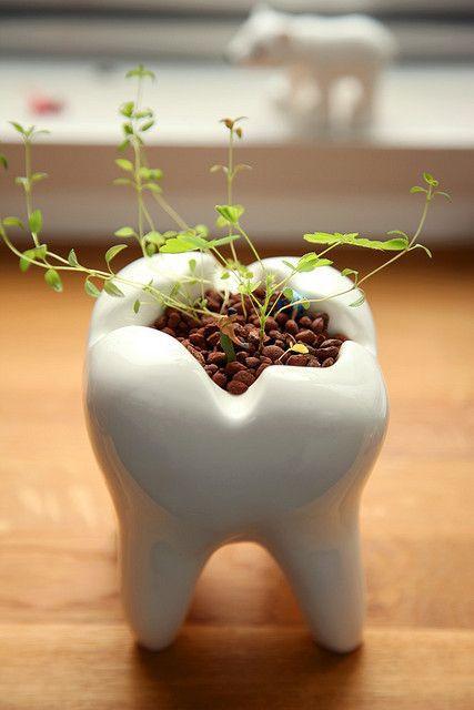 Горшок-зуб для цветка 2