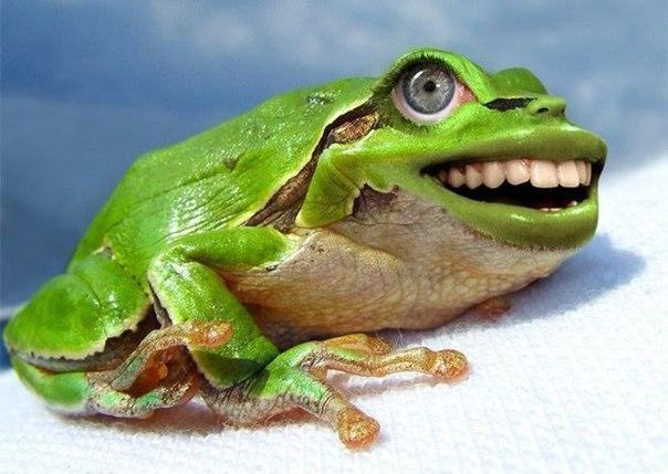 Лягушка с новыми зубами