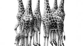 Зубные жирафетки