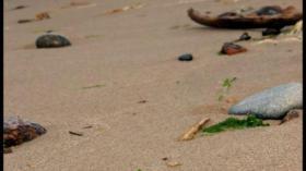 Лето кончилось, берега обмелели