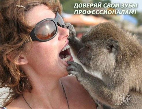 На приеме у обезьянки