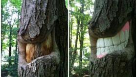 Дерево и стоматолог