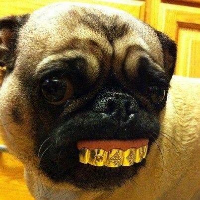Красивая улыбка у собаки