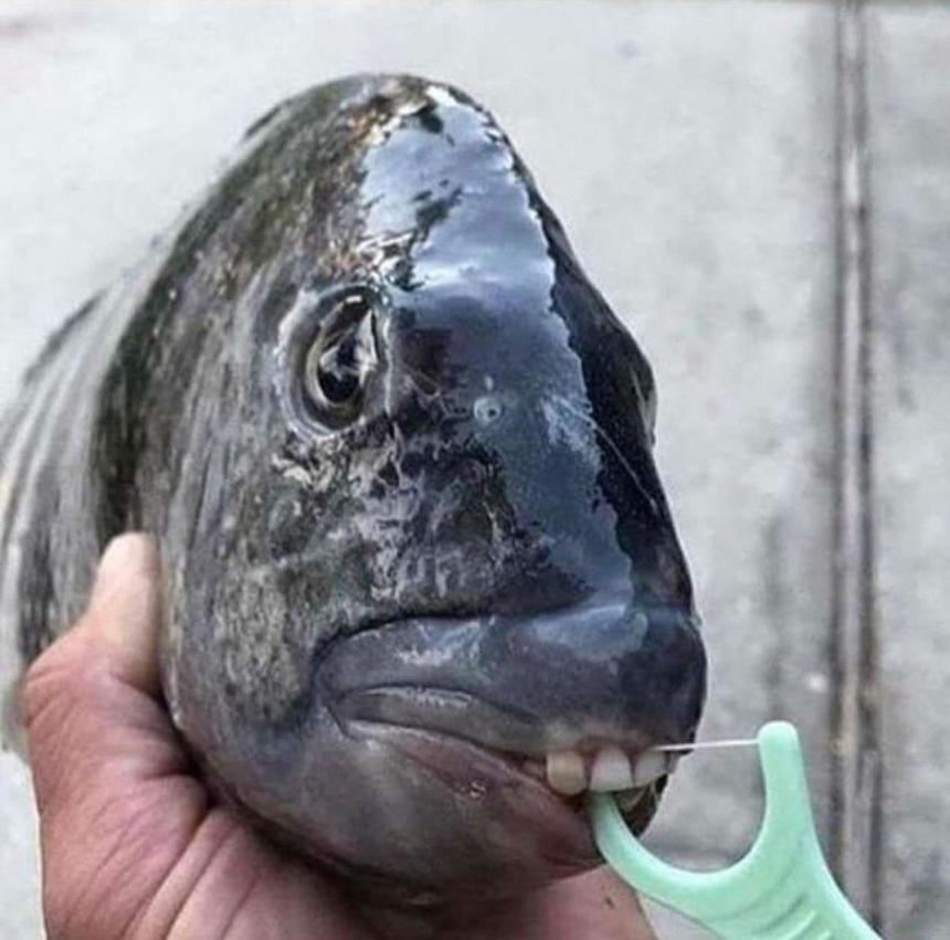 Зубастенькая рыбка 2