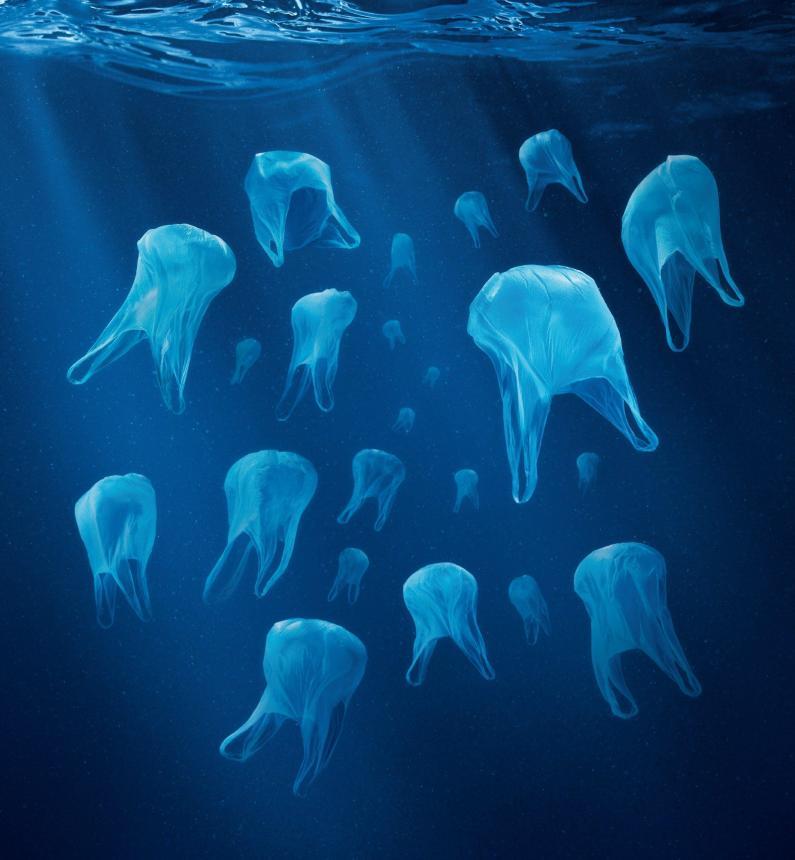 Медуза, пакет или зуб