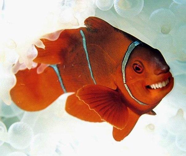 Зубастенькая рыбка