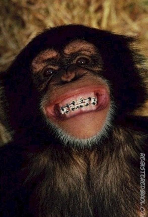 Обезьяна после посещения ортодонта 2