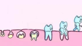 Эволюция зуба