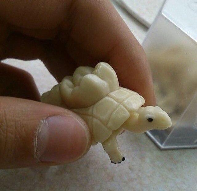 Зубная черепашка