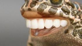 Лягушка с зубами 2