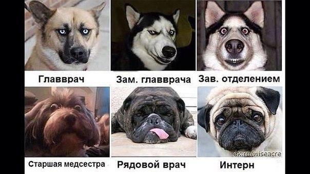 Медицина в лицах собак