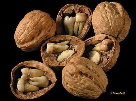 Орехи с зубами