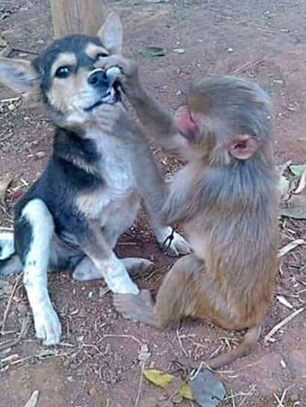 На приеме у обезьянки 2