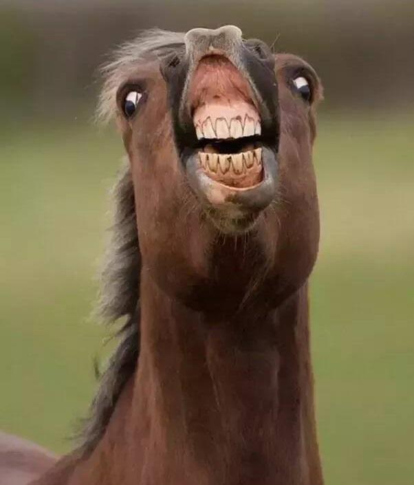 Как вам мои зубы?