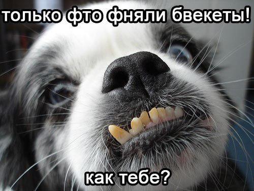 Работа ортодонта