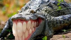 Зубастый крокодил 2