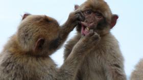 На приеме у обезьянки 5