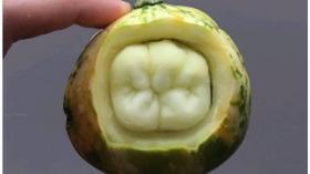 Тыквенный зуб