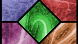 Цветная мозаика из стекла для эндодонтиста