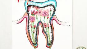 Внутренний мир зуба