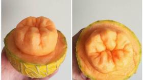 Дынный зуб