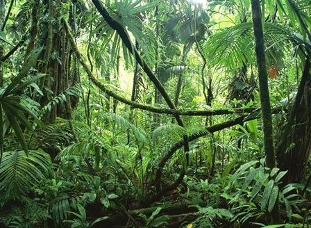 Вещество, полученное от тропических растений, может снимать зубную боль