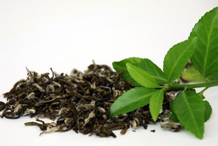 Химический состав зеленого чая может запустить механизм борьбы с раком ротовой полости