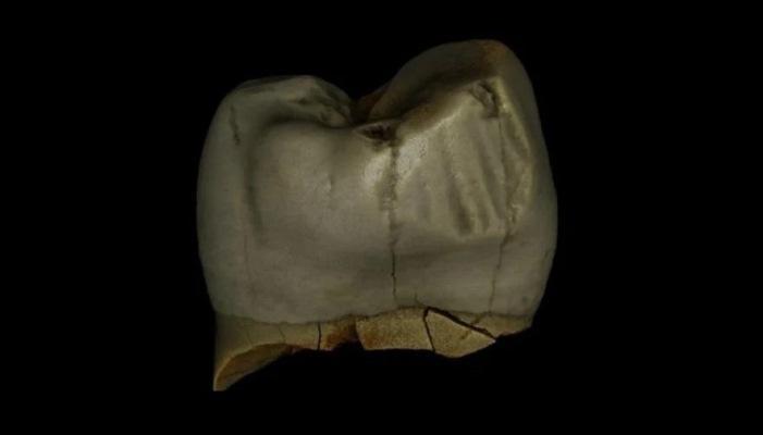 Древние люди пользовались аналогом современной зубочистки